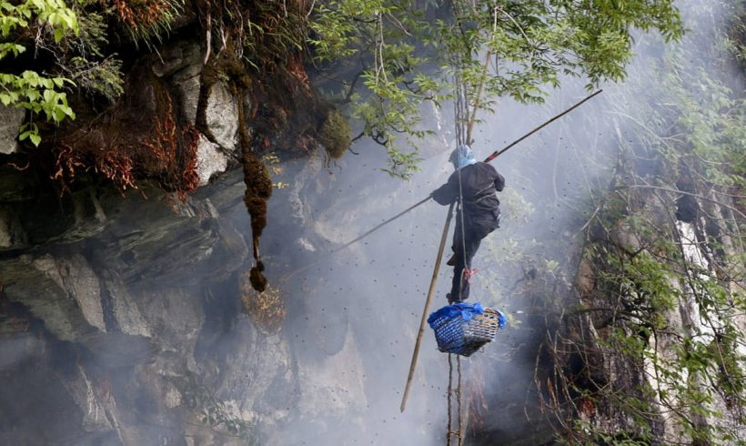 Honey Hunting: A Death-defying Adventure